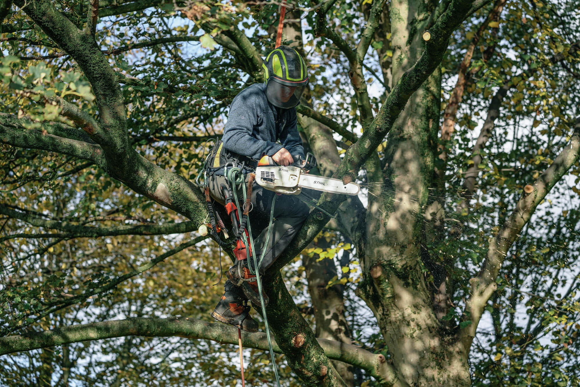 A Arborist doing a crown lift in a tree in Stannington, Sheffield