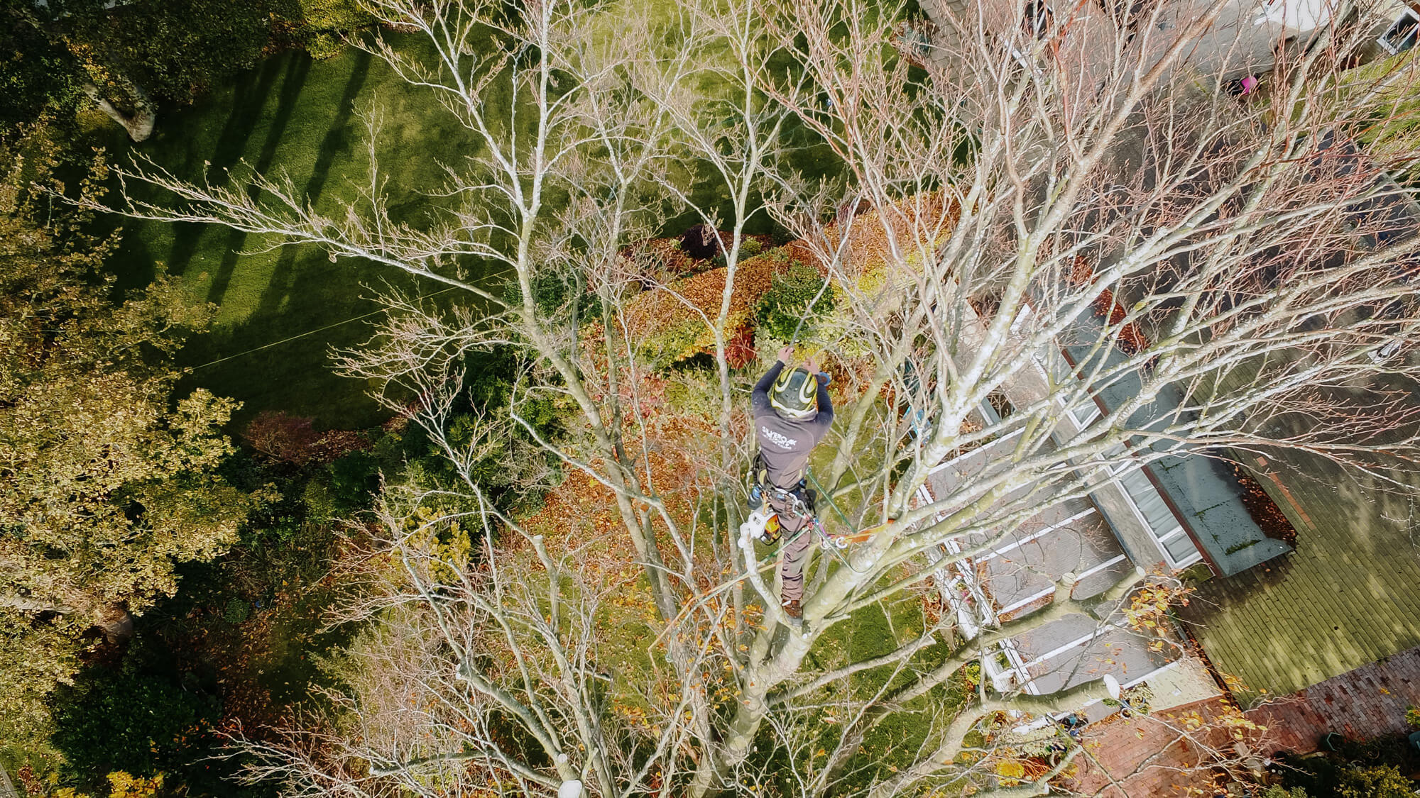An aerial photo of an arborist working in Dore in Sheffield