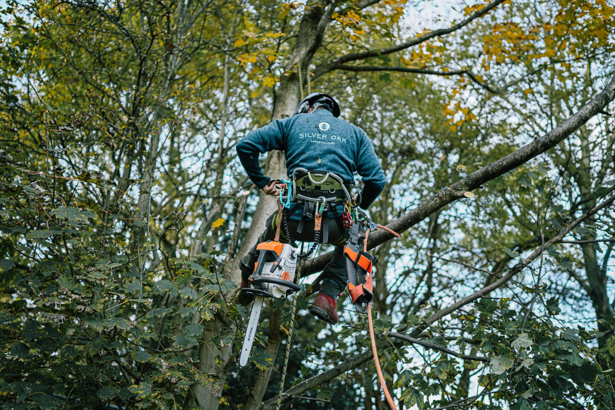 A tree surgeon working in the tree in Sheffield
