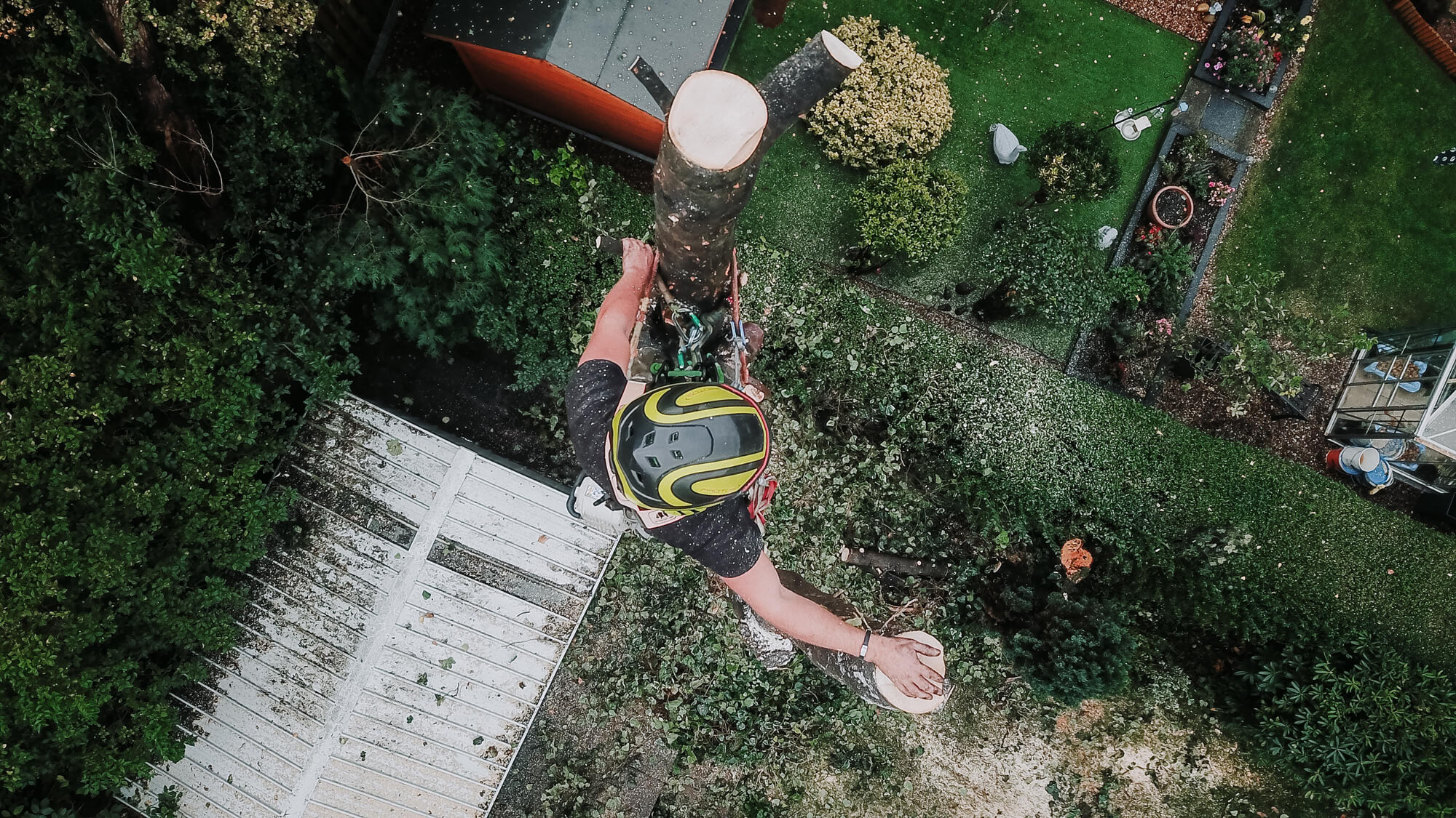 Aerial shot of a tree surgeon dismantling a tree in Sheffield